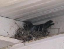 Dirty Bird Pictures Bad Bird Control